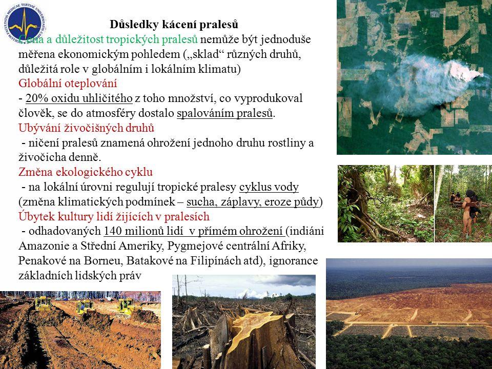 Důsledky kácení pralesů