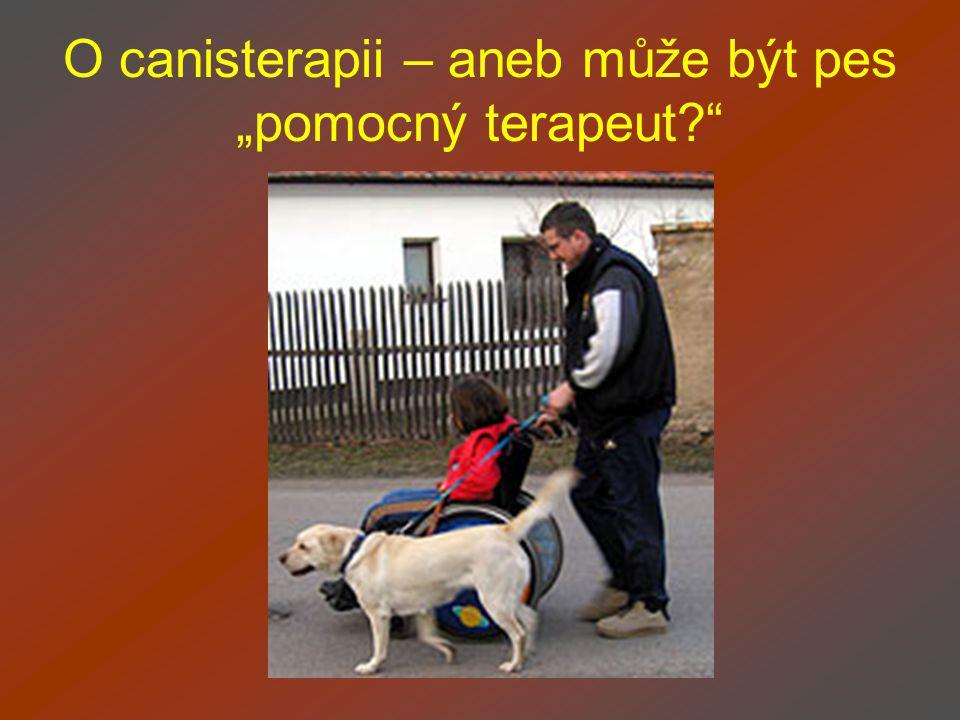 """O canisterapii – aneb může být pes """"pomocný terapeut"""