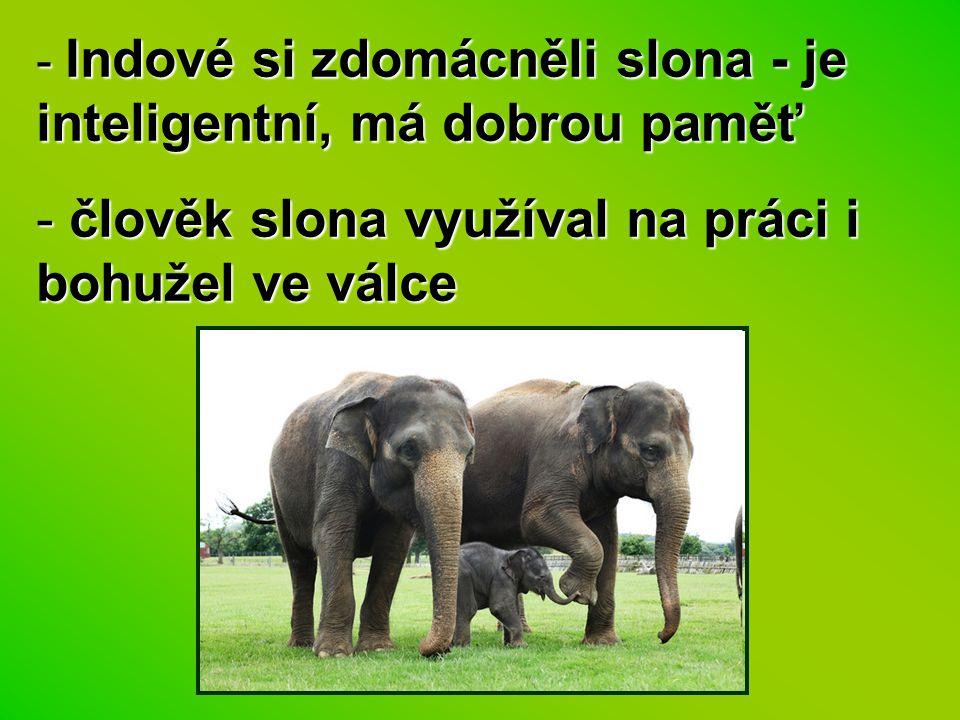 člověk slona využíval na práci i bohužel ve válce