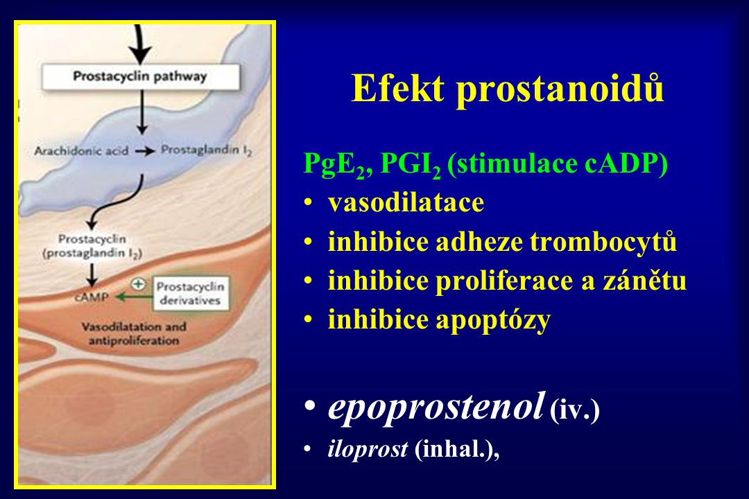Efekt prostanoidů epoprostenol (iv.) PgE2, PGI2 (stimulace cADP)
