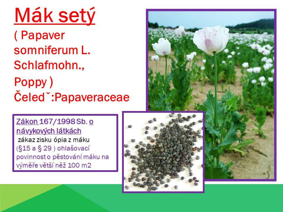 Mák setý ( Papaver somniferum L. Schlafmohn., Poppy )
