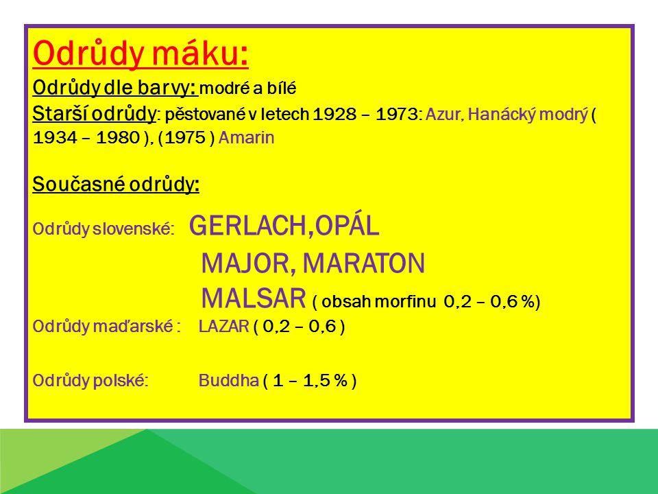 Odrůdy máku: MAJOR, MARATON MALSAR ( obsah morfinu 0,2 – 0,6 %)