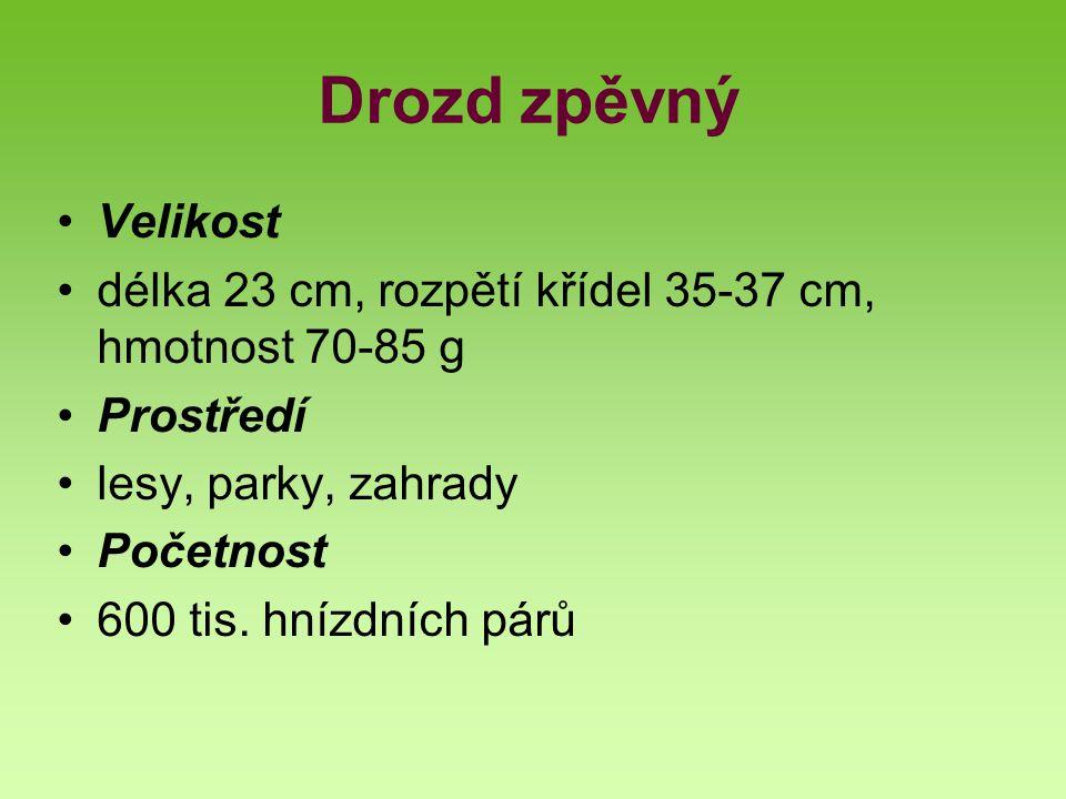 Drozd zpěvný Velikost. délka 23 cm, rozpětí křídel 35-37 cm, hmotnost 70-85 g. Prostředí. lesy, parky, zahrady.