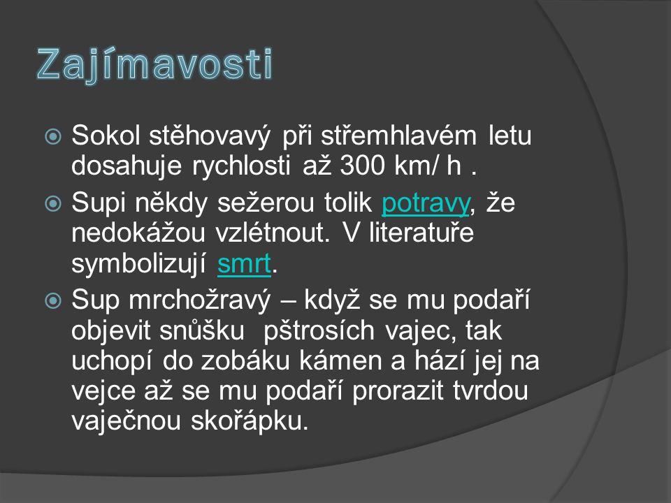 Zajímavosti Sokol stěhovavý při střemhlavém letu dosahuje rychlosti až 300 km/ h .
