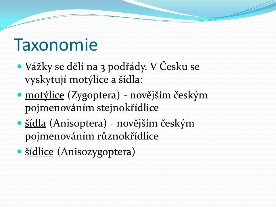 Taxonomie Vážky se dělí na 3 podřády. V Česku se vyskytují motýlice a šídla: motýlice (Zygoptera) - novějším českým pojmenováním stejnokřídlice.