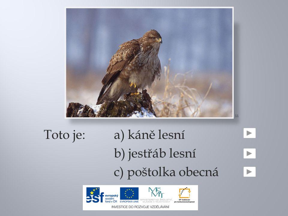 11 Toto je: a) káně lesní b) jestřáb lesní c) poštolka obecná