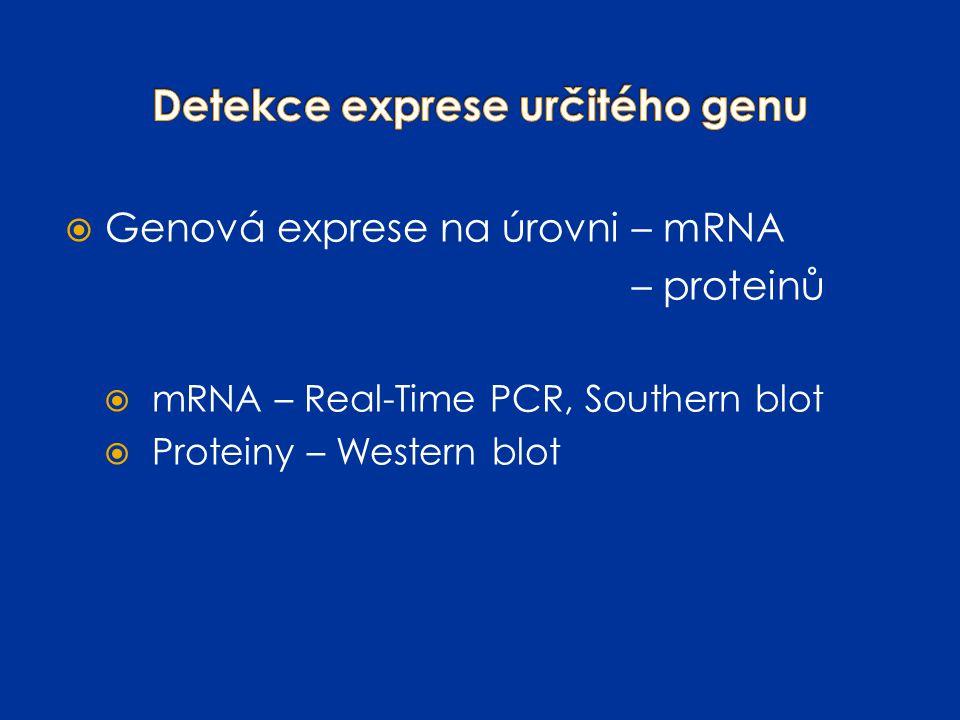 Detekce exprese určitého genu