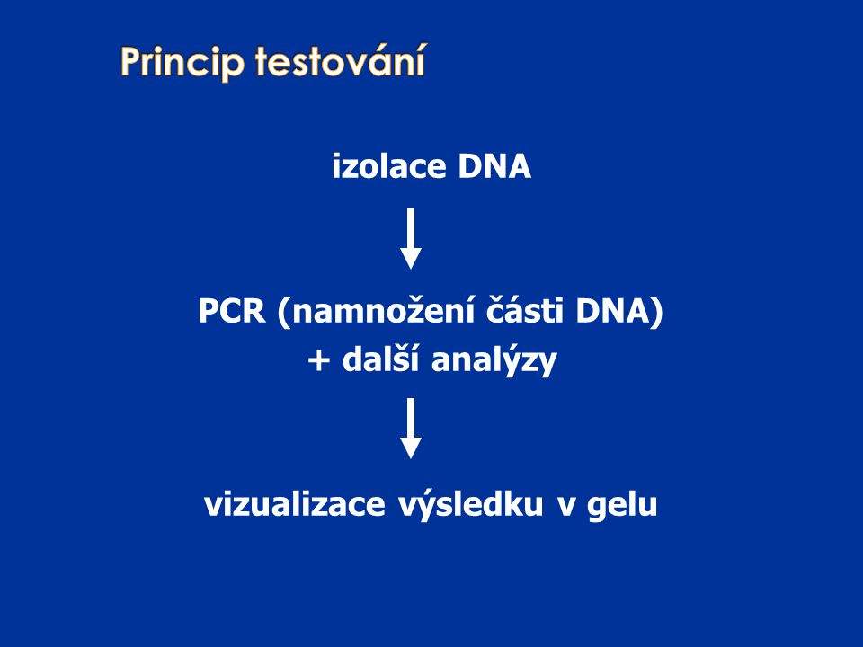 PCR (namnožení části DNA) vizualizace výsledku v gelu