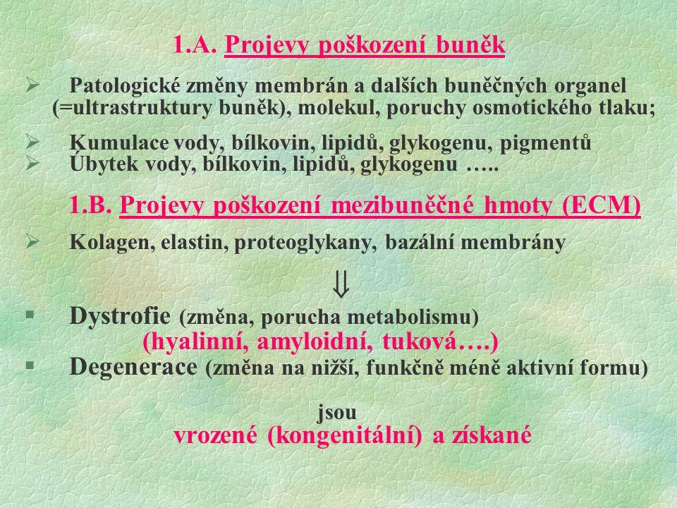 1.A. Projevy poškození buněk