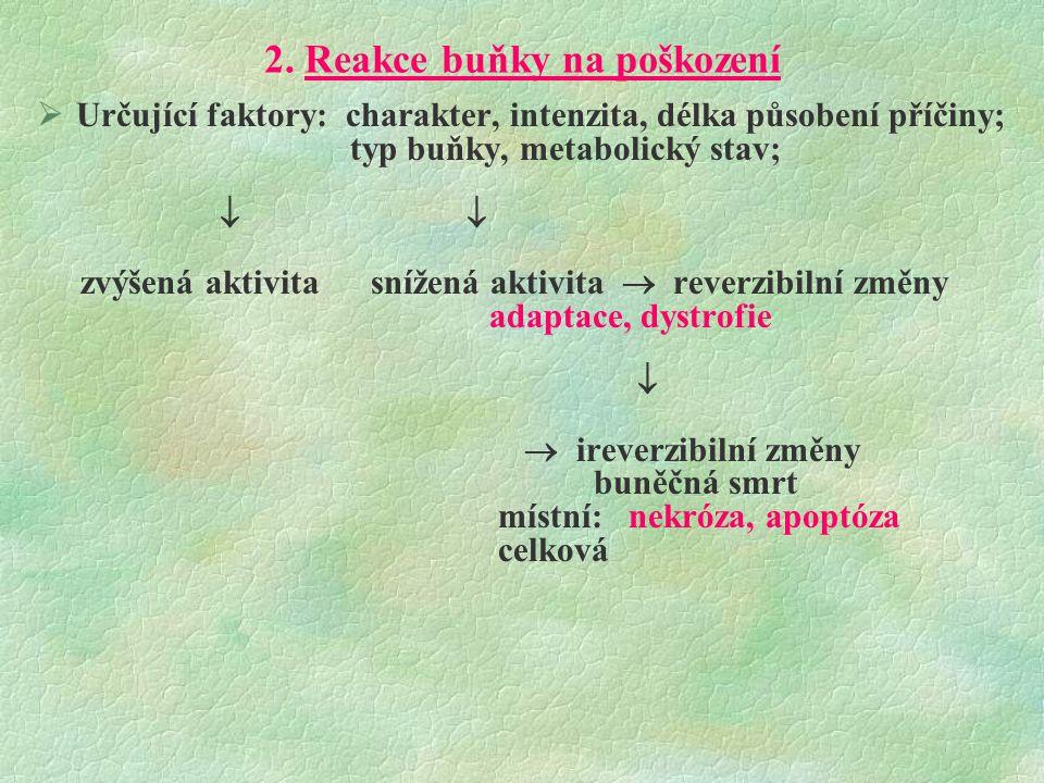 2. Reakce buňky na poškození
