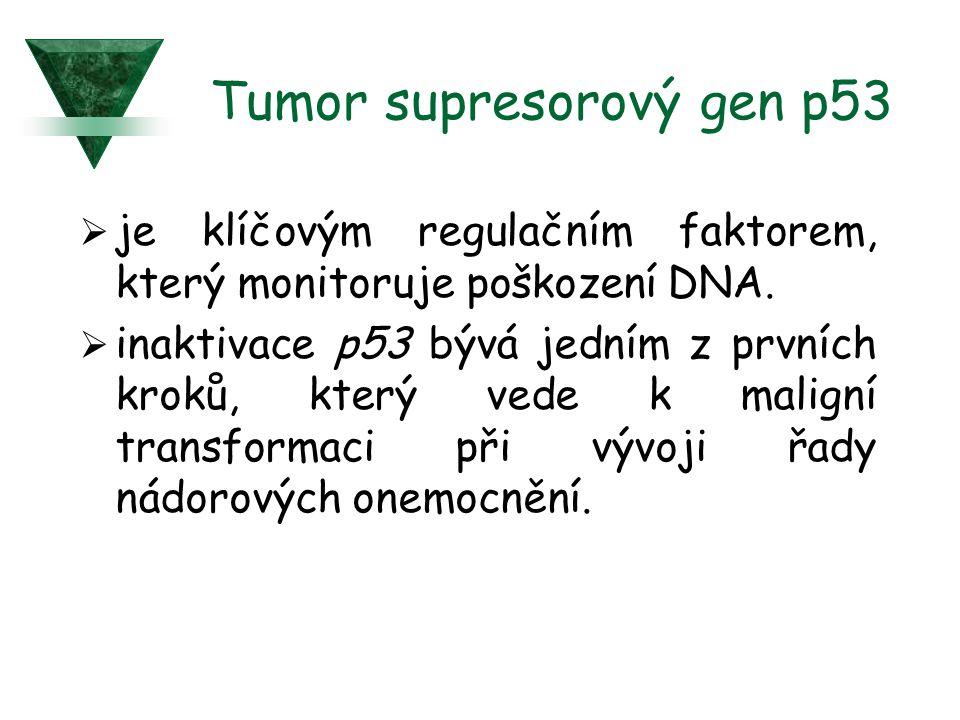 Tumor supresorový gen p53