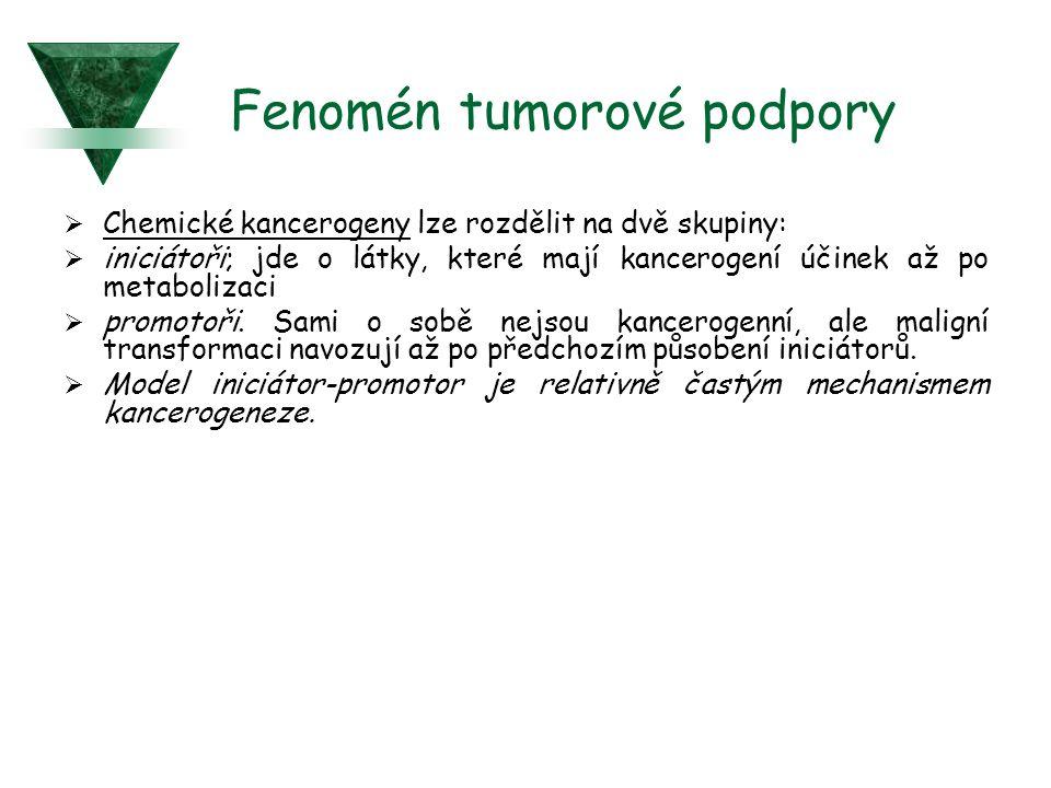 Fenomén tumorové podpory