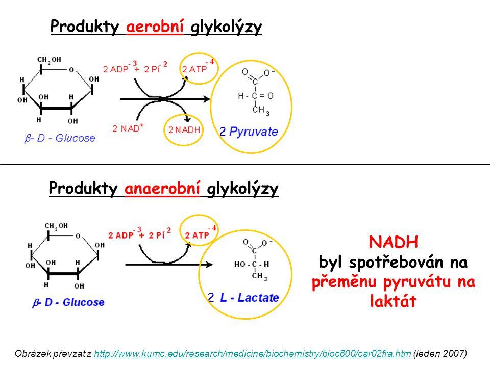 Produkty aerobní glykolýzy
