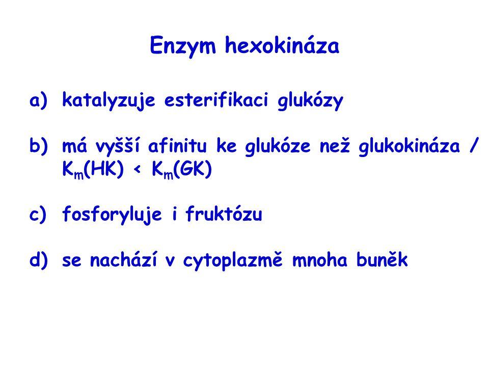 Enzym hexokináza katalyzuje esterifikaci glukózy