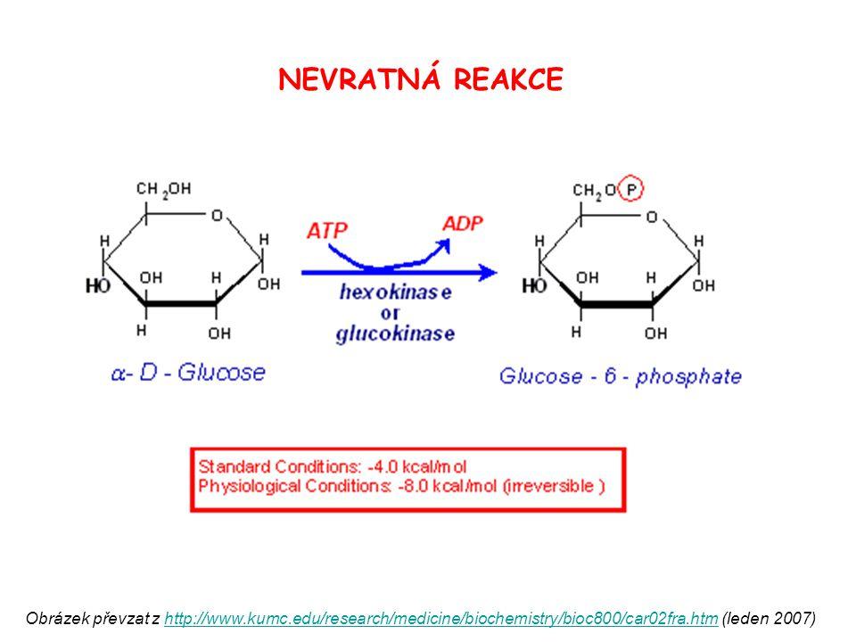 NEVRATNÁ REAKCE Obrázek převzat z http://www.kumc.edu/research/medicine/biochemistry/bioc800/car02fra.htm (leden 2007)