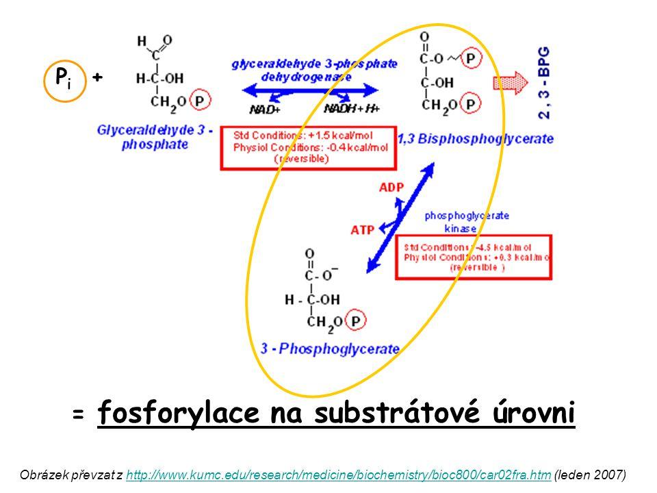 = fosforylace na substrátové úrovni