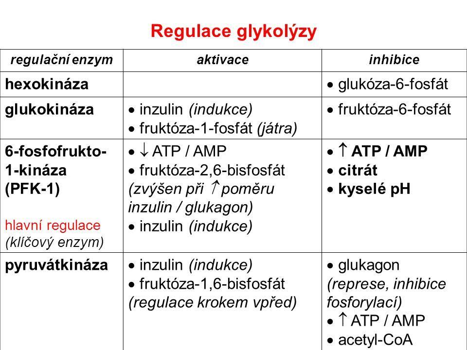Regulace glykolýzy hexokináza glukóza-6-fosfát glukokináza