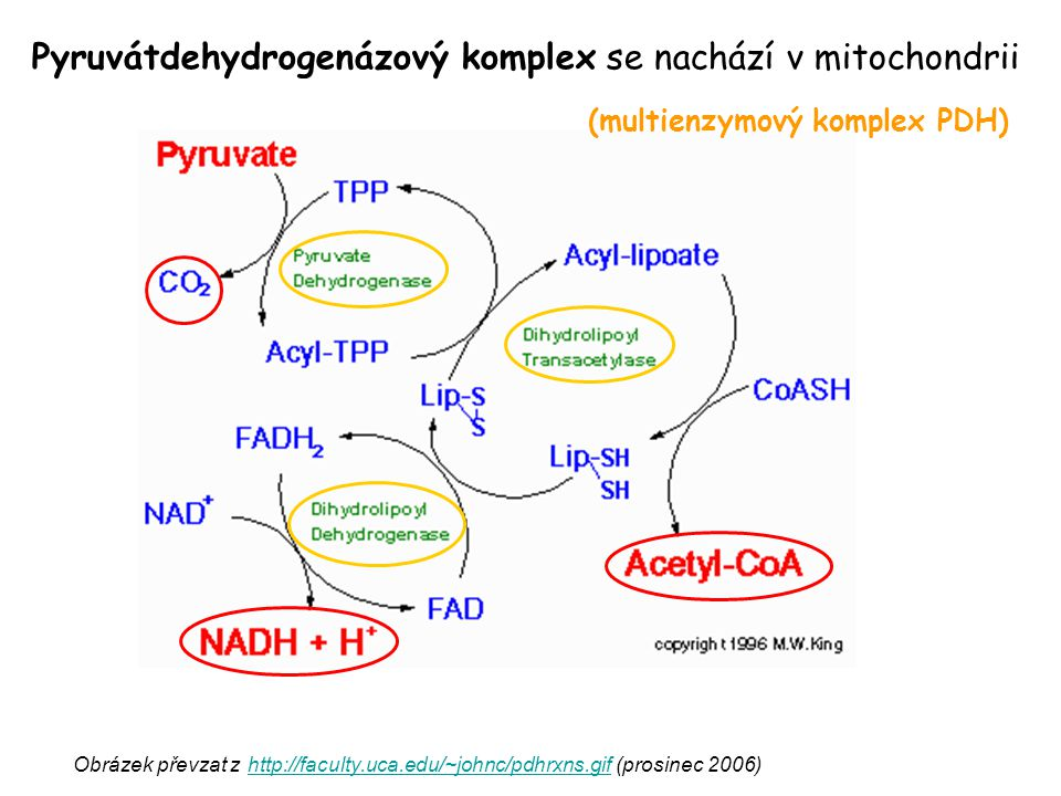 (multienzymový komplex PDH)