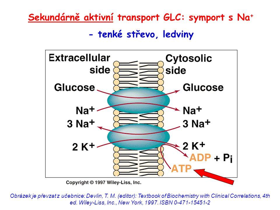 Sekundárně aktivní transport GLC: symport s Na+