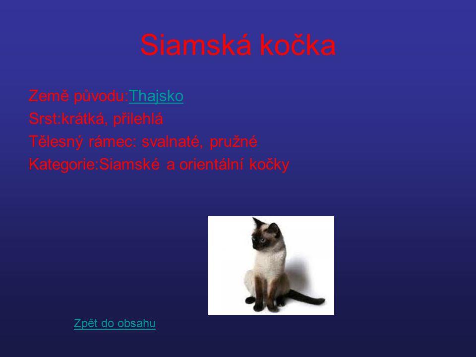 Siamská kočka Země původu:Thajsko Srst:krátká, přilehlá