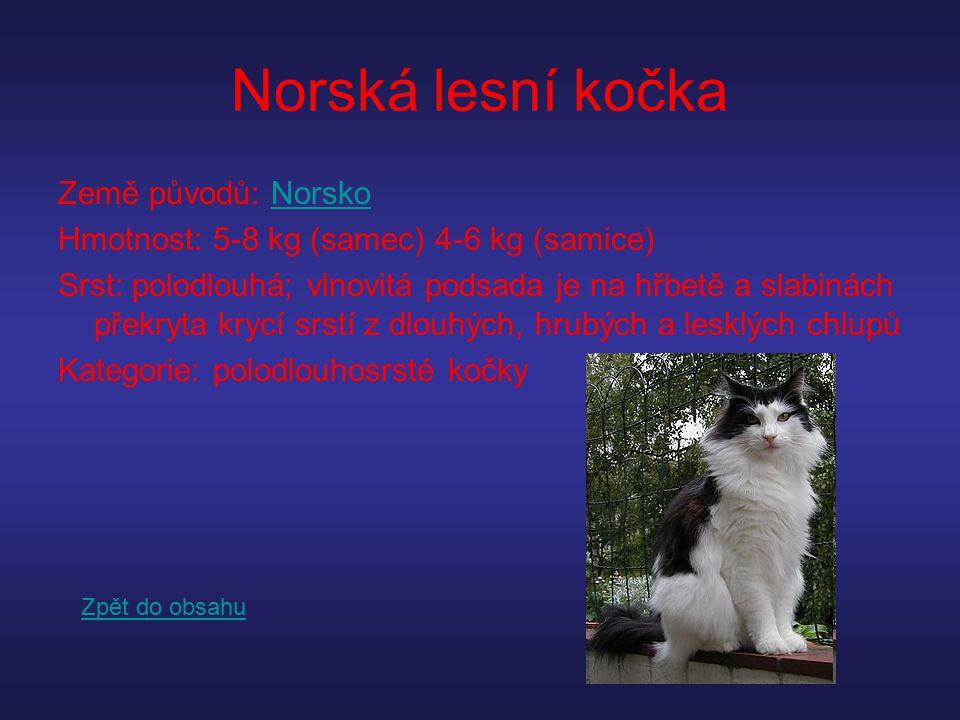 Norská lesní kočka Země původů: Norsko