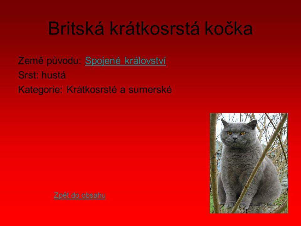 Britská krátkosrstá kočka