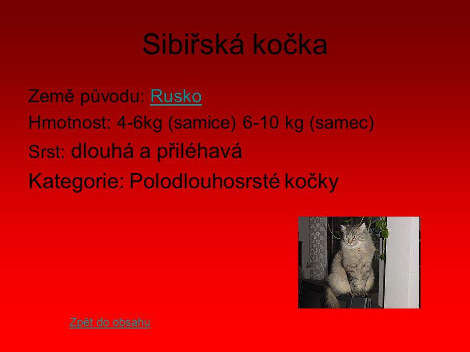 Sibiřská kočka Kategorie: Polodlouhosrsté kočky Země původu: Rusko