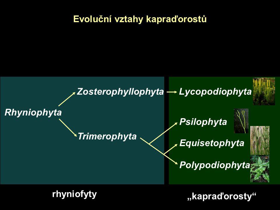 Evoluční vztahy kapraďorostů
