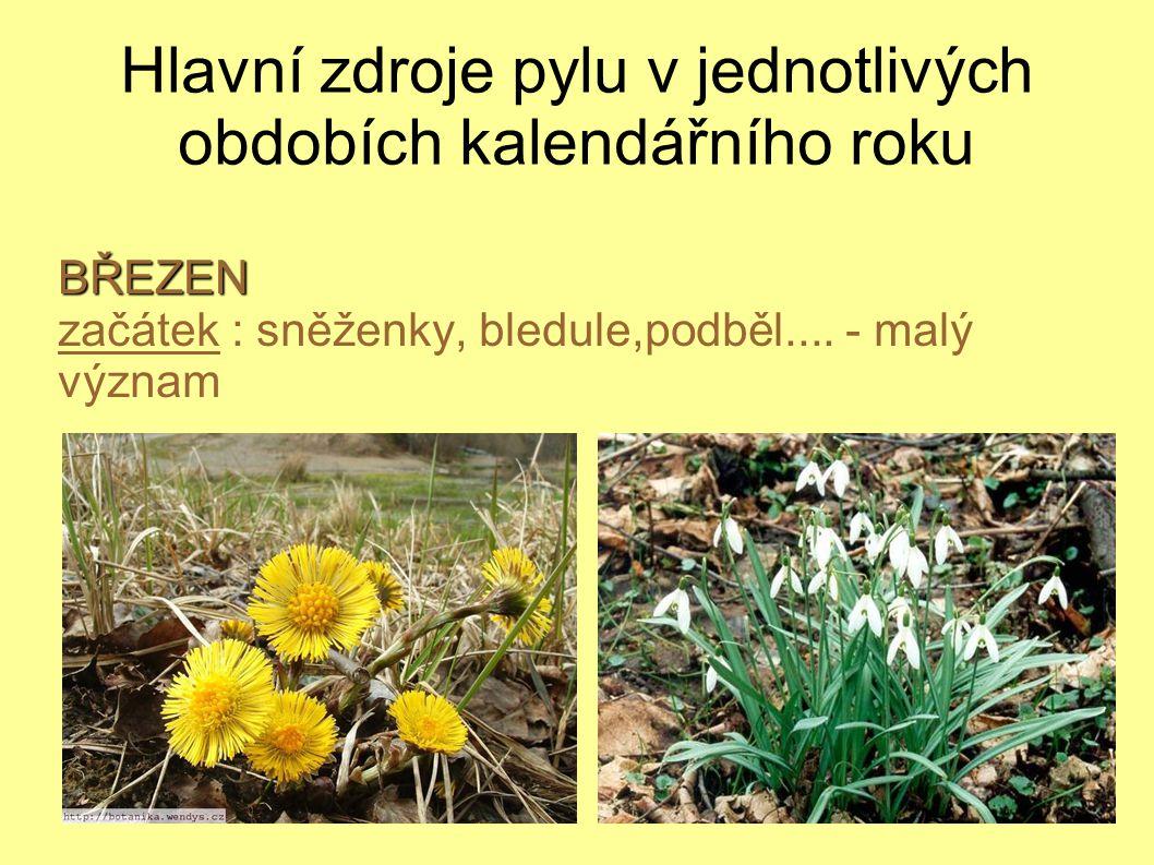 Hlavní zdroje pylu v jednotlivých obdobích kalendářního roku
