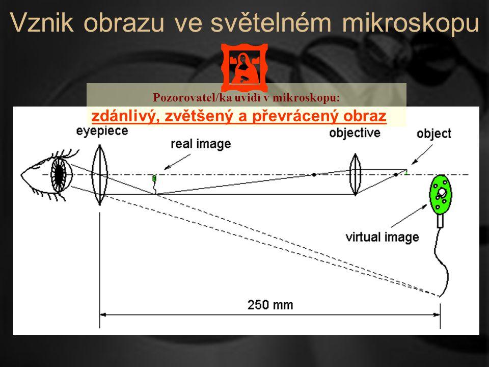 Vznik obrazu ve světelném mikroskopu