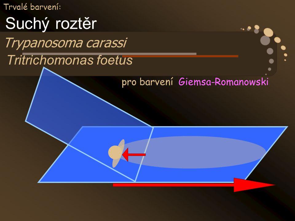 Trvalé barvení: Suchý roztěr Trypanosoma carassi Tritrichomonas foetus pro barvení Giemsa-Romanowski