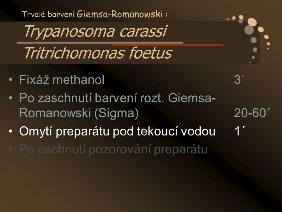 Po zaschnutí barvení rozt. Giemsa- Romanowski (Sigma) 20-60´
