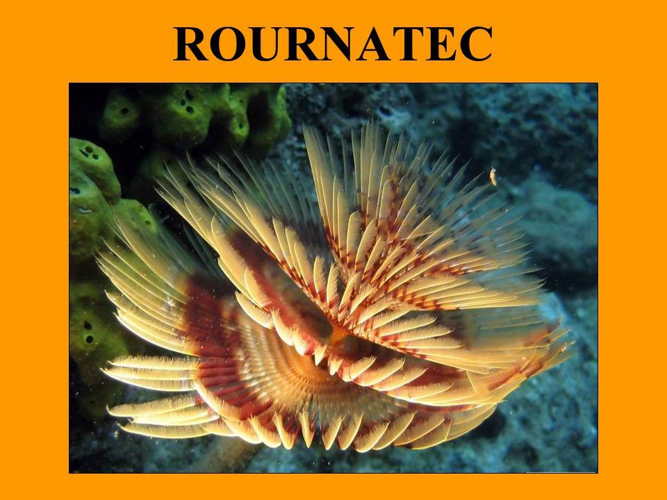 ROURNATEC
