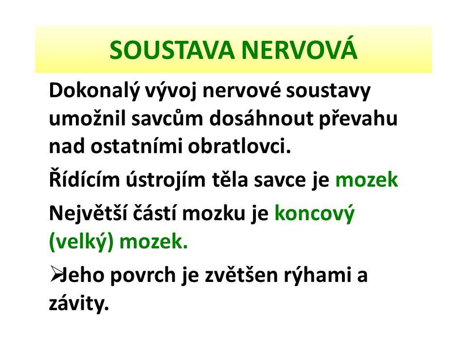 SOUSTAVA NERVOVÁ Dokonalý vývoj nervové soustavy umožnil savcům dosáhnout převahu nad ostatními obratlovci.