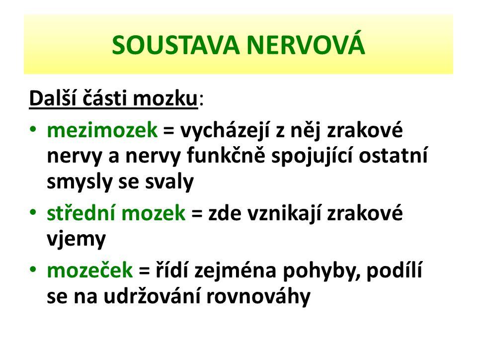 SOUSTAVA NERVOVÁ Další části mozku: