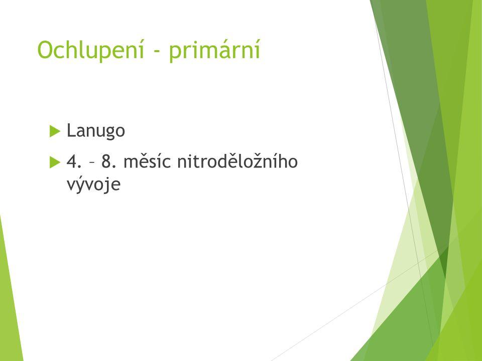 Ochlupení - primární Lanugo 4. – 8. měsíc nitroděložního vývoje