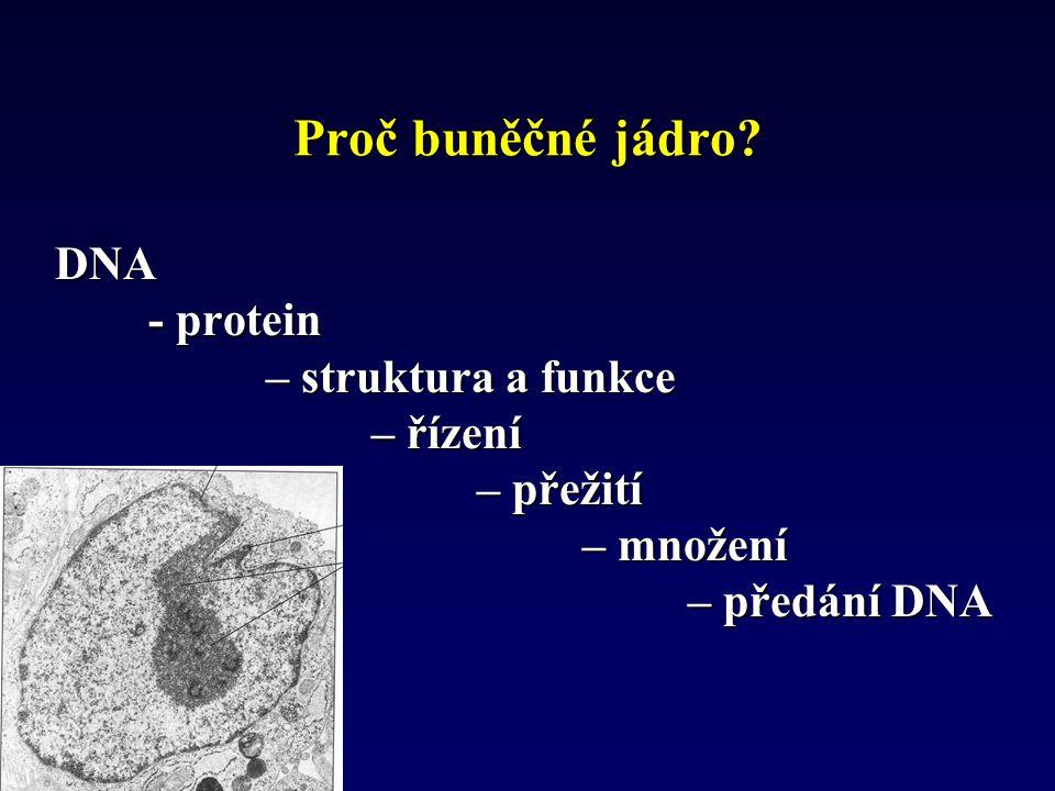 Proč buněčné jádro DNA - protein – struktura a funkce – řízení