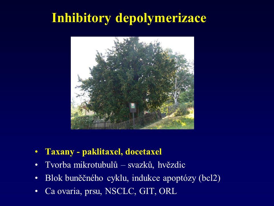 Inhibitory depolymerizace