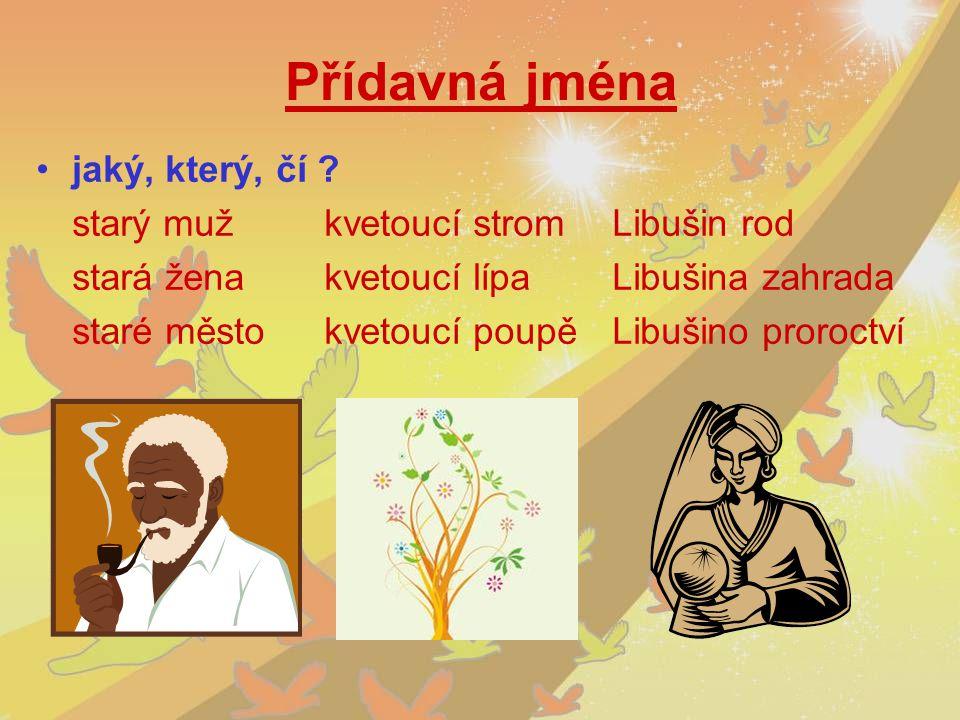 Přídavná jména jaký, který, čí starý muž kvetoucí strom Libušin rod