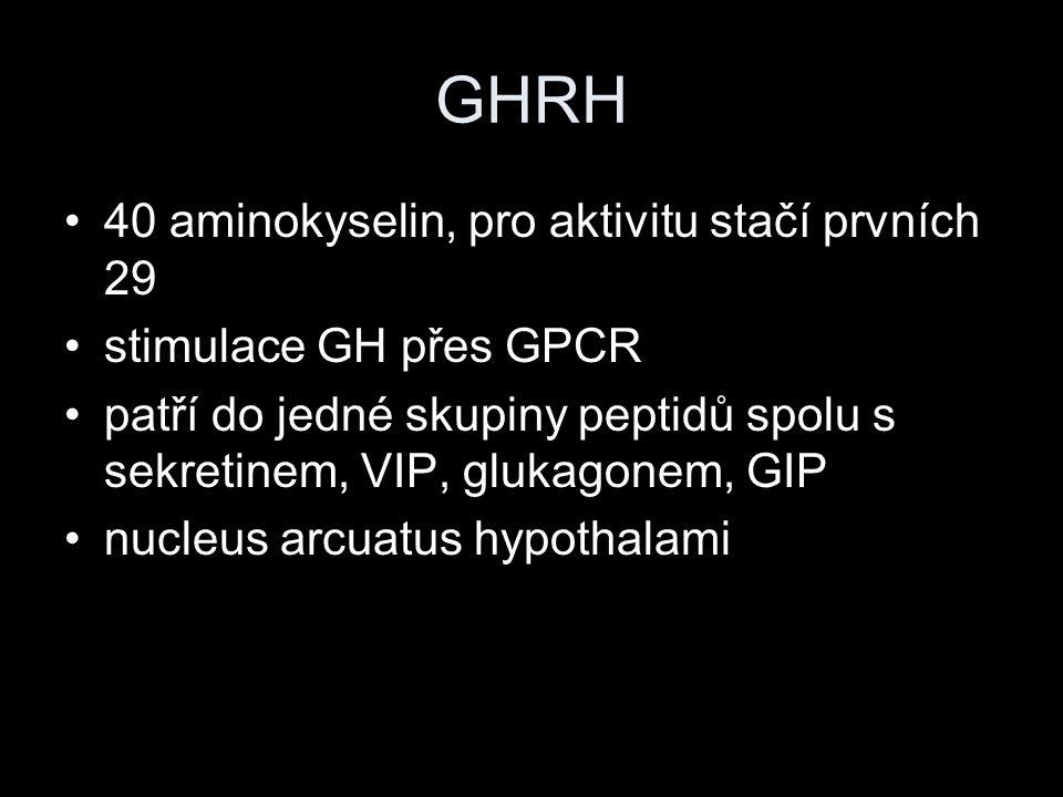 GHRH 40 aminokyselin, pro aktivitu stačí prvních 29