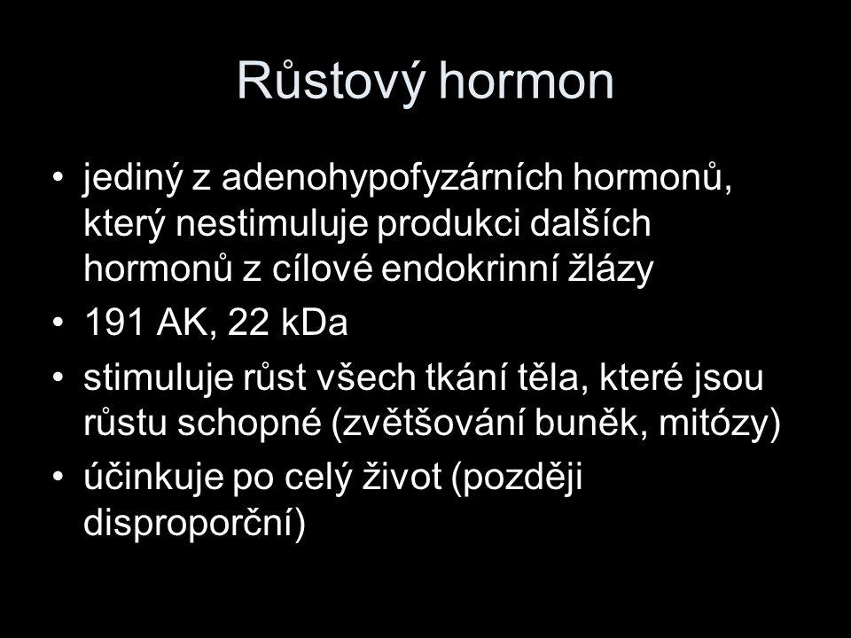 Růstový hormon jediný z adenohypofyzárních hormonů, který nestimuluje produkci dalších hormonů z cílové endokrinní žlázy.
