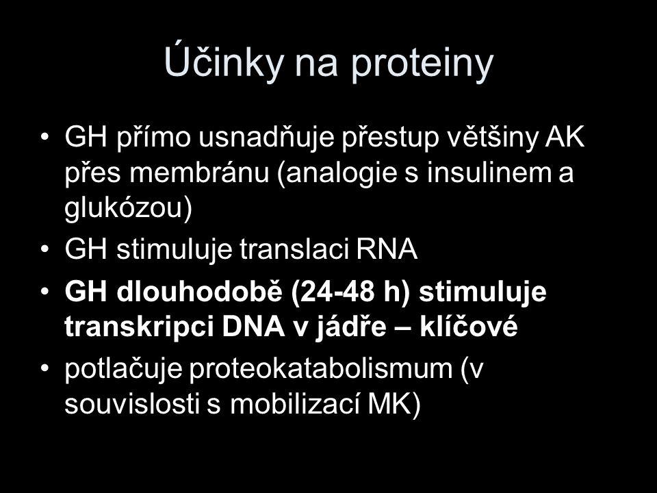 Účinky na proteiny GH přímo usnadňuje přestup většiny AK přes membránu (analogie s insulinem a glukózou)