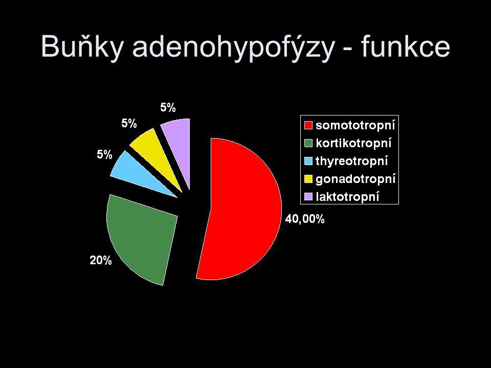 Buňky adenohypofýzy - funkce