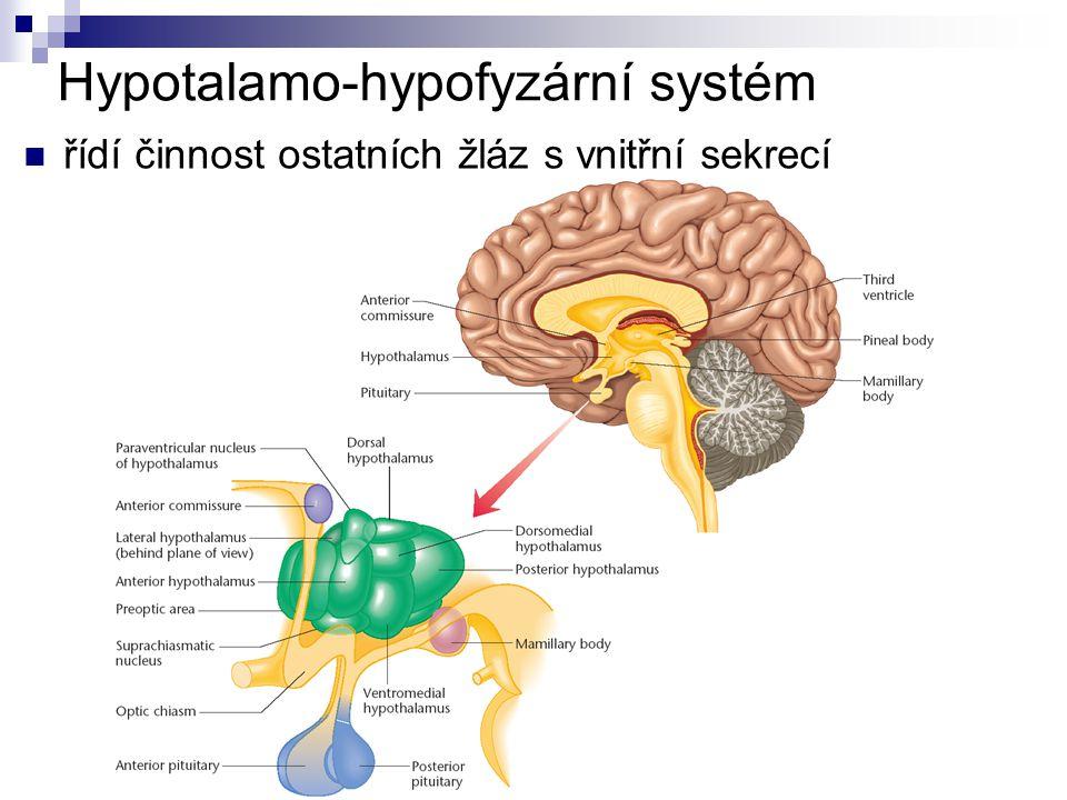 Hypotalamo-hypofyzární systém