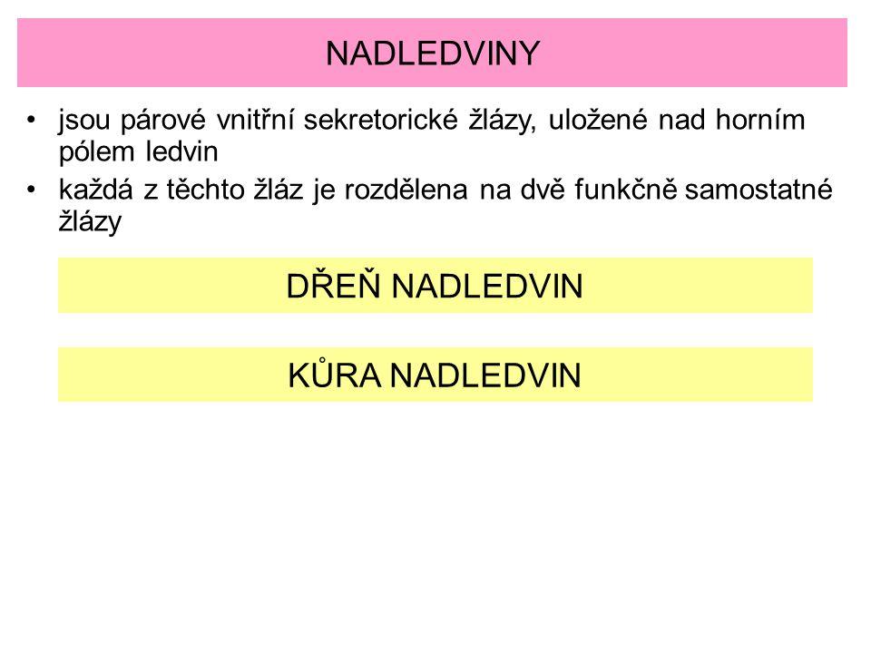 NADLEDVINY DŘEŇ NADLEDVIN KŮRA NADLEDVIN