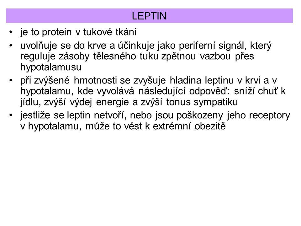 LEPTIN je to protein v tukové tkáni.