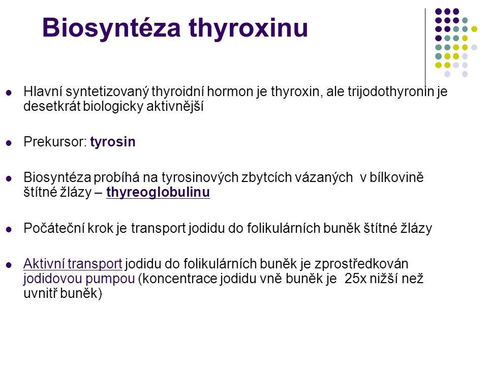 Biosyntéza thyroxinu Hlavní syntetizovaný thyroidní hormon je thyroxin, ale trijodothyronin je desetkrát biologicky aktivnější.