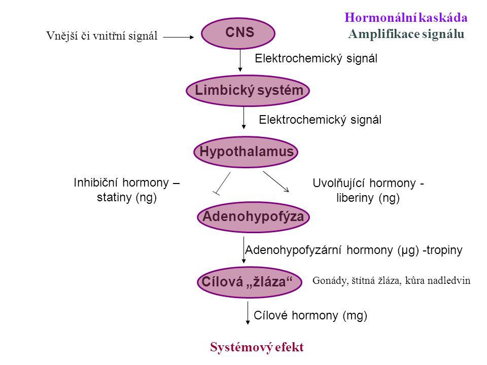 Hormonální kaskáda Amplifikace signálu