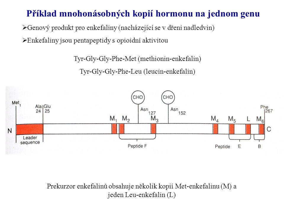 Příklad mnohonásobných kopií hormonu na jednom genu