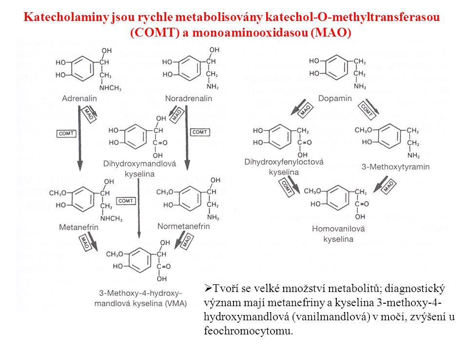 Katecholaminy jsou rychle metabolisovány katechol-O-methyltransferasou (COMT) a monoaminooxidasou (MAO)